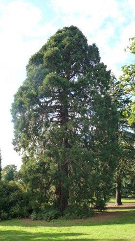 Redwood World